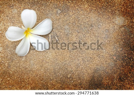 grunge background with flowers and space for text or image - stock photo