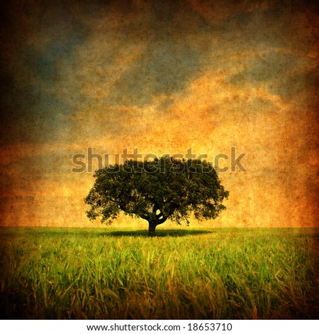 Grunge background with Lonely tree - square format