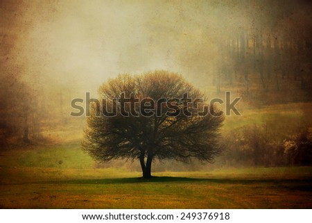 grunge background with one tree in pastoral autumn meadows  - stock photo