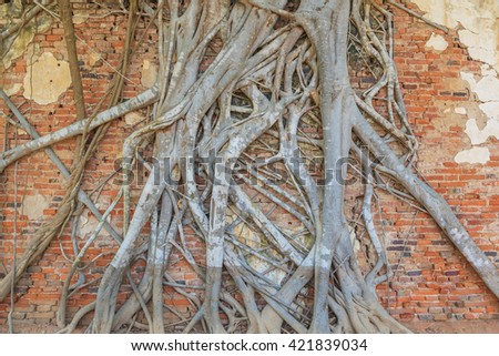 Grunge brick wall coveraged by root tree, can be used for background - stock photo