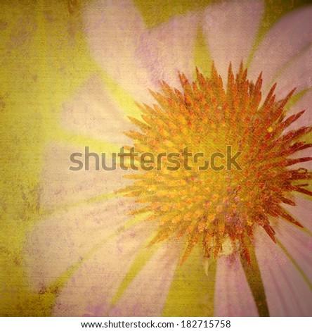 grunge daisy canvas texture background - stock photo