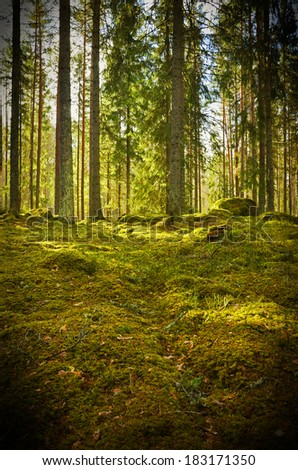 Grunge forest background in sweden. Texture conceptual image - stock photo
