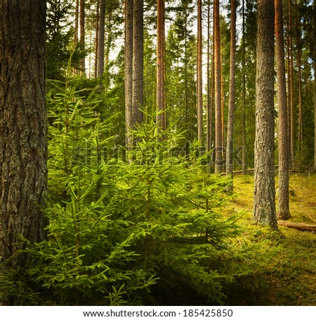 Grunge forest in Sweden. Textured conceptual image - stock photo