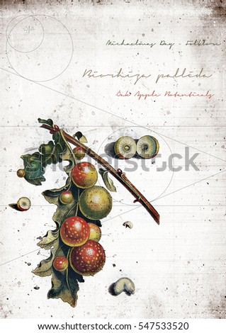 Grunge graffiti effect image of ancient English oak apples, ideal for your bistro or restaurant wall art or menu cover design art. Generous accommodation for copy space.
