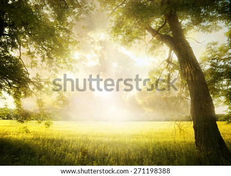 Grunge image. landscape with tree on the field - stock photo