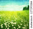 Grunge image of daisy field. - stock photo