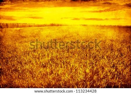 Grunge image of green grass at sunset. - stock photo