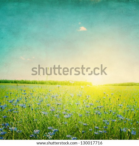 Grunge image of sunset over agricultural field with blue cornflowers.