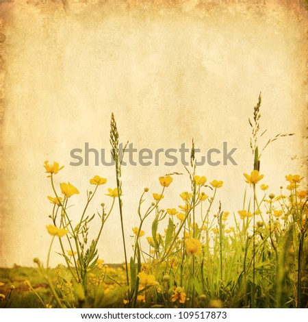 Grunge image of yellow buttercups in the field.