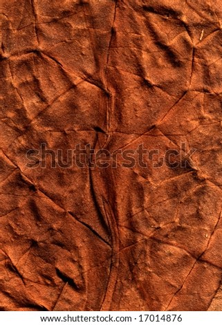 Grunge leaf texture. Perfect as a background.