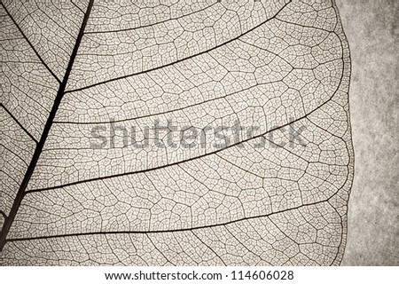 grunge macro of a delicate leaf cell structure - stock photo