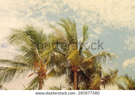 grunge palm background,vintage effect filter style pictures - stock photo