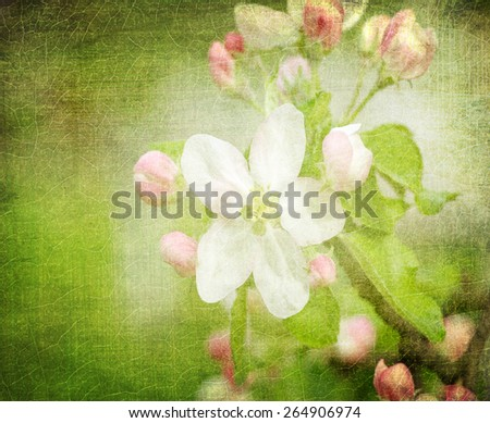grunge paper with blossom - stock photo