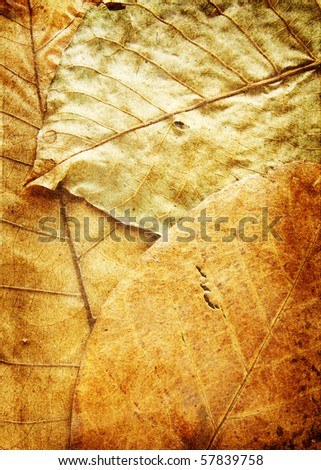 grunge plant background