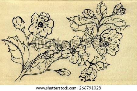 Grunge sketch of blooming sakura branch on paper background. - stock photo