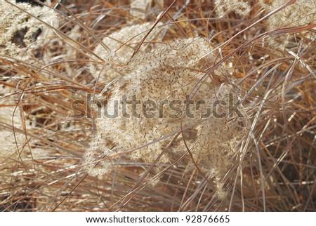 Grunge texture of dry grass - stock photo