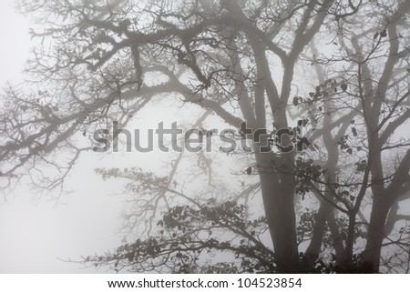 grunge trees in fog - stock photo