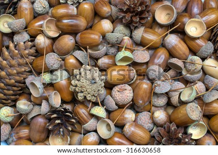 grunge weathered wood  background with acorns and cones fall decoration - stock photo