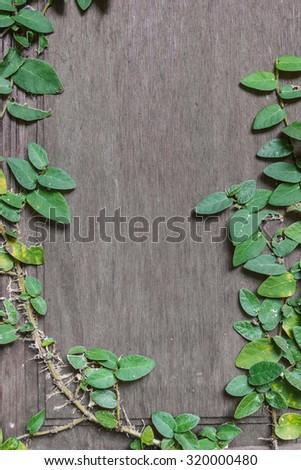 Grunge wood background with ivy climbing tree. - stock photo