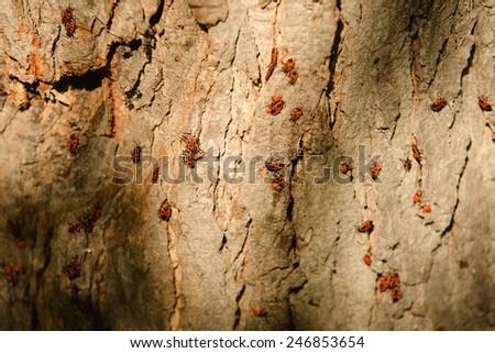 Grunge wood texture with bugs. Closeup. Autumn day - stock photo