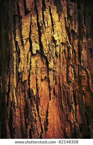grungy tree texture.