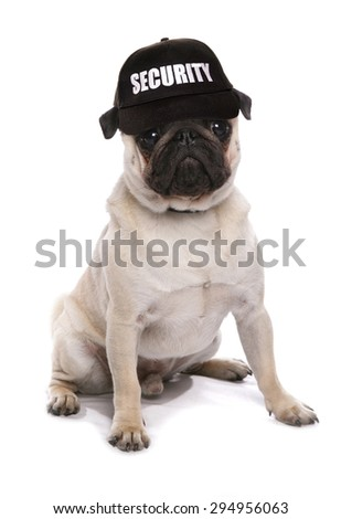 guard dog pug studio cutout