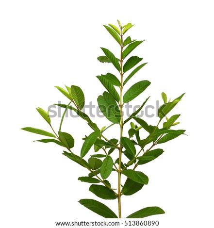 Purple Sage: Instrucciones para la plantación y el cuidado | DoItYourself.com