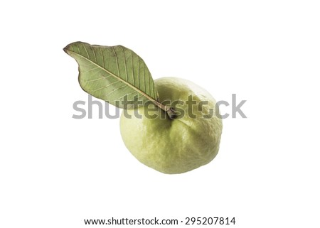 Guava single fresh fruit top view on white background. - stock photo