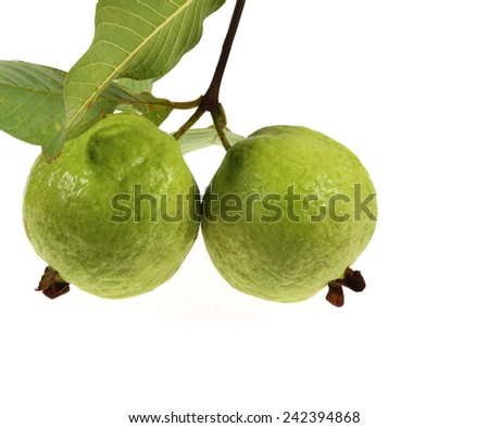 Guava tropical fruit isolated on white background with working path