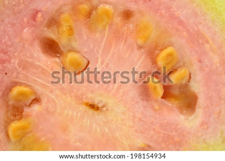 Guava with background, closeup side and breast profile - stock photo