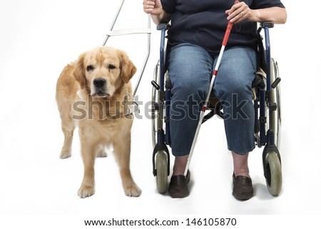 Guide dog and wheelchair isolated on white - stock photo