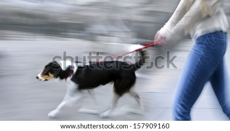 Guide dog is helping bilnd people in motion blur - stock photo
