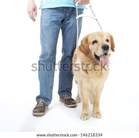 Guide dog isolated on white - stock photo