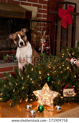 Guilty Dog - stock photo