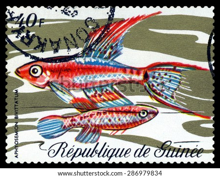 GUINEA - CIRCA 1971: a stamp printed by Guinea show the fishes  Aphyosemion bivittatum, circa 1971 - stock photo