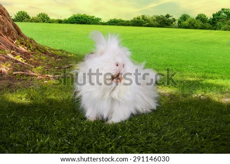guinea pig eating grass under a tree on a summer day - stock photo