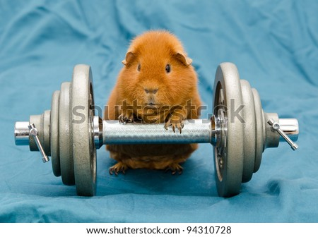 guinea power reloaded - stock photo