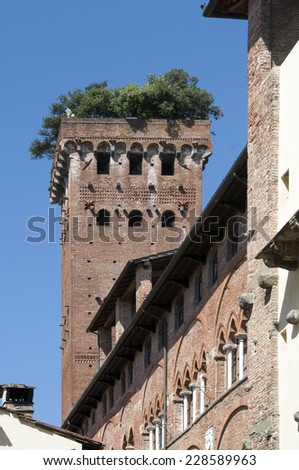 Guinigi tower in Lucca, Italy, with trees on the top (44 meters tall, 230 steps)