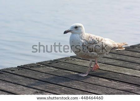 gull bird ozean - stock photo
