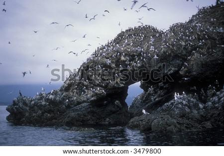 Gull Island, Alaska - stock photo