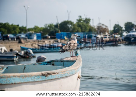 Gull on the boat - stock photo