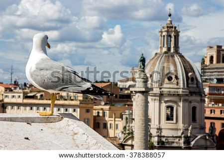 gull on the outlook above historical center of Rome. Seagull stands over the roofs of Roma. Seagull watching Rome in summer. Bird on rooftops in the historic city center.