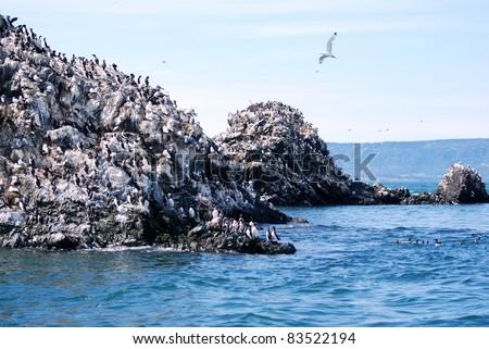 Gull Rock near Homer Alaska with Seagulls - stock photo