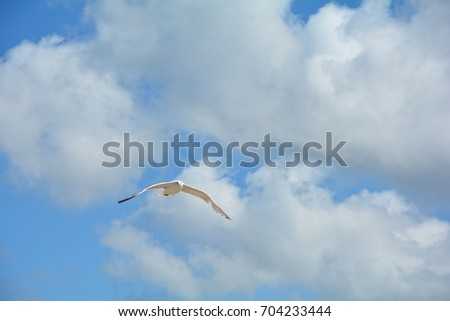 Gull with much blue sky and many  clouds