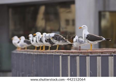 Gulls - stock photo