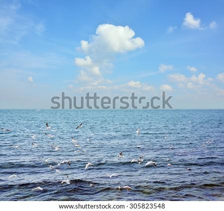 gulls above a sea - stock photo