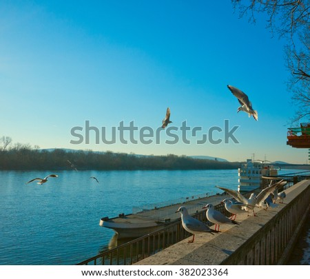 gulls,birds,river,blue river,outside,objects,blue background,freedom,wings,ship,nobody - stock photo