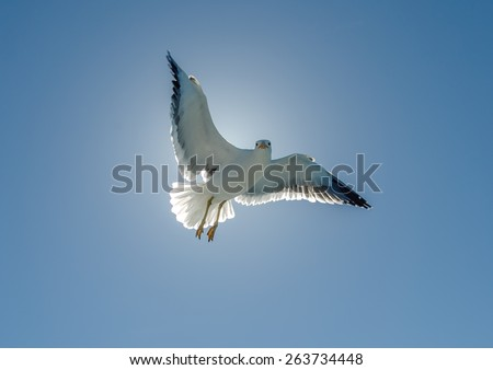 Gulls fly above a pleasure boat - Namibia, South Africa - stock photo