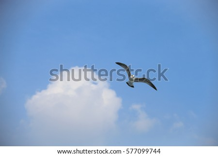 Gulls flying on clear sky.Sea Gull, Common Gull, Sea Bird