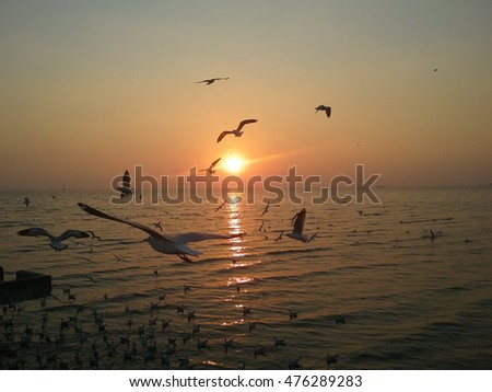Gulls flying on the beach at sunset.